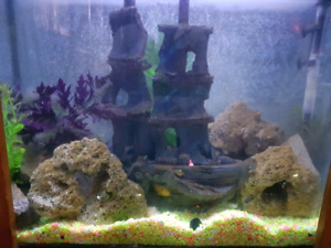 Fish tank with cichlids