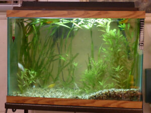 3 complete aquariums