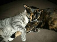 Need to find a home for my 2 kitties :-(