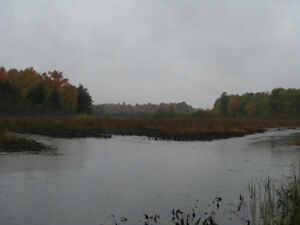 Tay River! 2 acre residential lots - Perth Village Peterborough Peterborough Area image 8
