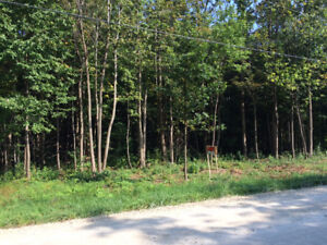 Treed building lot for sale