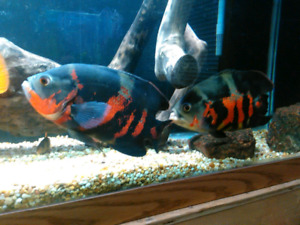 -updated- Cichlids and more.