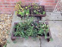 Cast Iron Garden Planters