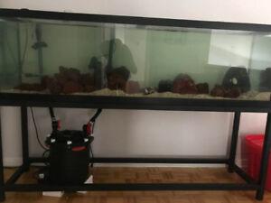 Aquarium 125G tout equipé