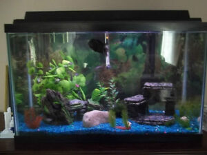 30, 20 and 10 gal complete Aquariums