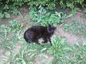 Wonderful friendly, neutered, shots-FREE CAT Male