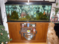 48 Gallon Fish Tank with Tons of Extras