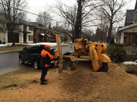 STUMP GRINDING / STUMP REMOVAL * tree removal