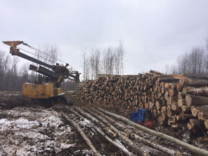 Standing Timber / Land Clearing / Lot clearing / Hardwood