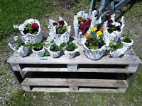 Hand crafted cement planters