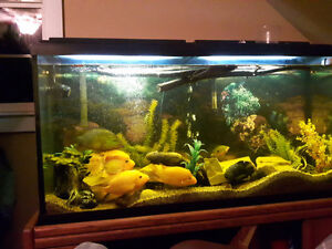 60 gallon south American cichlid tank and stand
