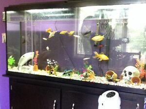 Fish for sale with accessories