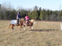 Christmas Riding Camp