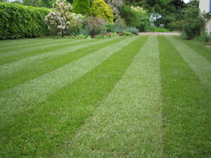 Lawn Cut, Trim and Blow