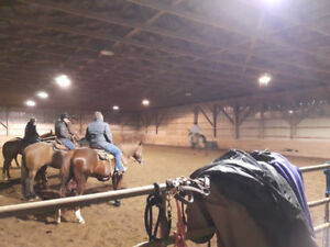 Horse board and riding lessons Seaforth