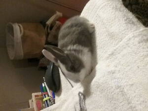 Rehome baby bunny for family with sealed yard: