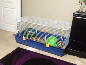 Cute rabbit with cage and more