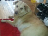 CASH DAILY` for DOG SITTING ...MY HOUSE....TODAY (THURSDAY)9AM
