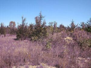 Level Vacant Land for Sale Belleville Belleville Area image 3