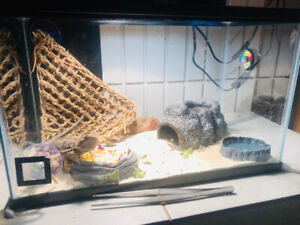 2.  7 month old Bearded Dragons for Sale