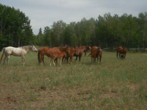2018 AQHA  FOALS FOR SALE