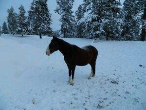 Andalusian mare - sold