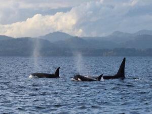 Spring Tide Whale watching for 2 adults