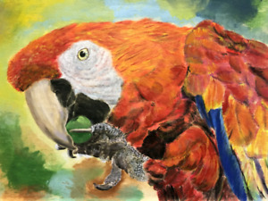 Professional Artist colorful parrot