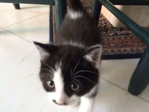 Kittens available!!