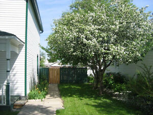 Cute Older House For Rent in Lacombe