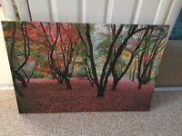 Large canvass forest picture