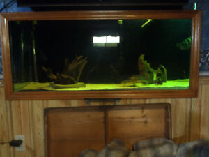 120 gallon tank with Fluval FX-6 and livestock