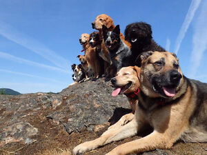 Nanaimo's Best Off-Leash Adventure Hikes, Pooch Pack Adventures!