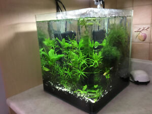 Aquarium.Star glass 10 gallon