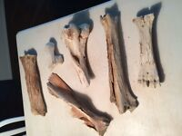 Very old collection of bones