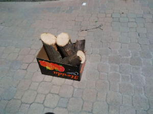 Firewood $5, York Mills/Don Valley Parkway