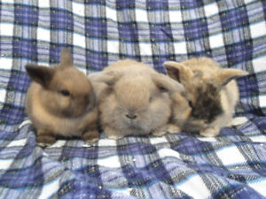 BABY BUNNY RABBITS READY VICTORIA DAY WEEKEND !!