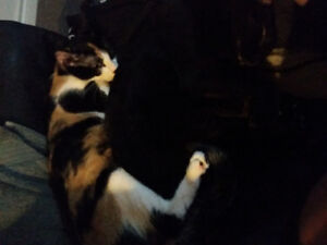 Giving away my 16 month old cat away