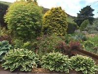 Large variety of herbaceous plants