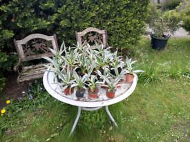 Various plants £3 each hersham surrey