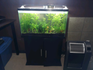 30 gallon fish tank with tons of live plants fish and shrimp