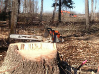 Land clearing Tree removal