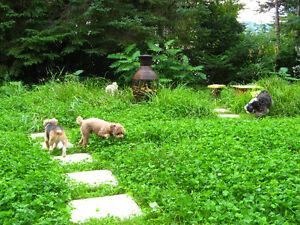 Pension pour chiens de petites races et pour chats à St-Sauveur Laurentides Québec image 2