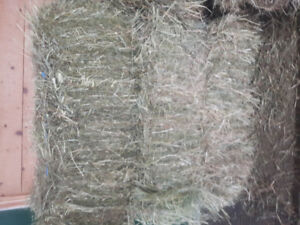 1st Cut Hay for Sale - Timothy/Orchard/Alfalfa