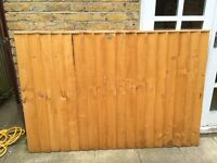 Fence panel - feather edge autumn gold