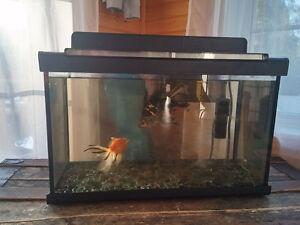 aquarium et ces poissons