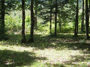 7 Acres Estate Property in Haliburton-$493 per Month