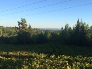 13 Treed Acres with Panaromic View