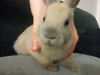 I want to give away a cute rabbit for free