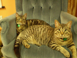 2 Cats need new home